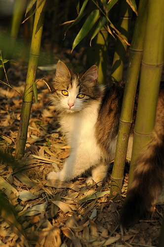Cat in bamboo forest