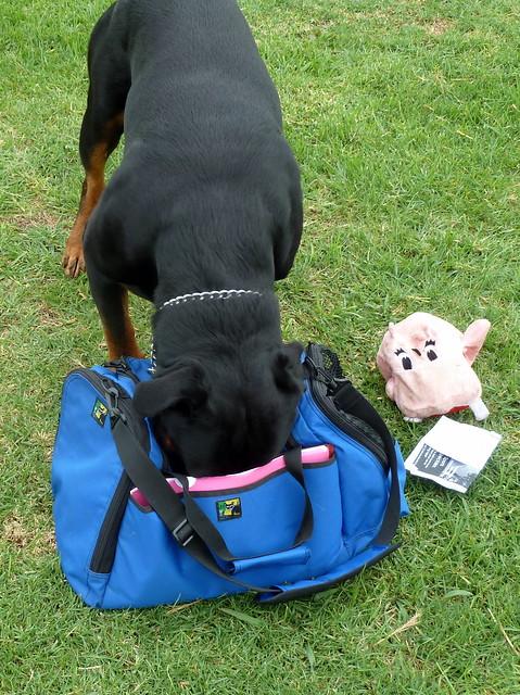 Image Result For Rottweiler Dog Training