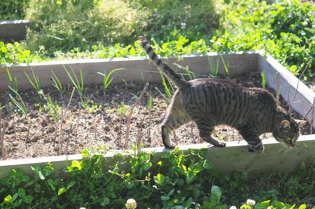 Intruder in the garden