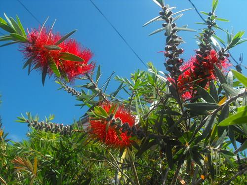 Flores en Costa Rica