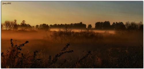 fog sunrise wetland