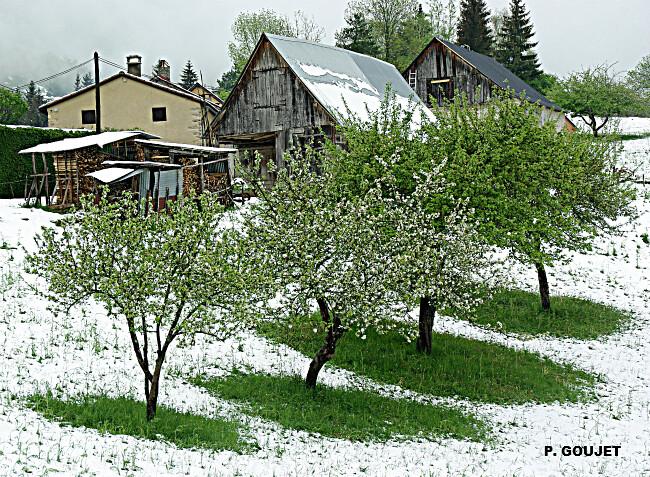 arbres fruitiers en fleurs sous la neige en Ariège le 5 mai 2010 météopassion