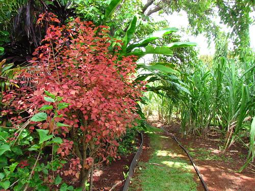 Allerton Garden