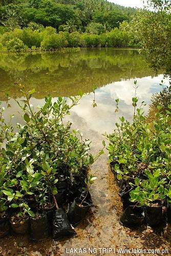 Bird and Mangrove Sanctuary in Romblon Island, Romblon