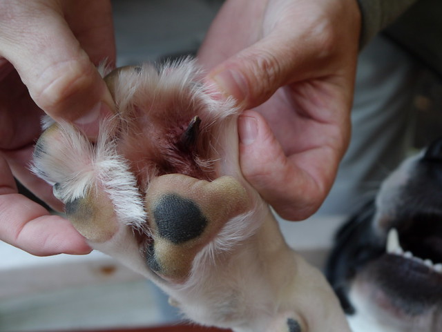 Image Result For Top Paw Dog