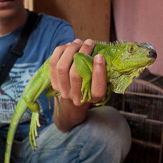 Lizard's for sale at Malang's Bird Market