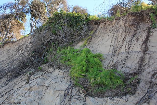 Beach Erosion, Old Bar Beach, Old Bar, Near Taree, NSW