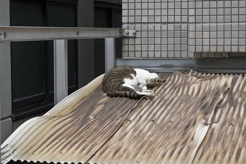 Cat_2012-07-06N01