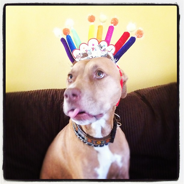 Dog Safe Birthday Cakes Recipes