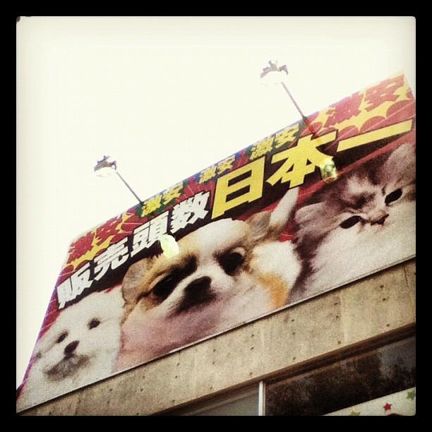 Obey my dog!
