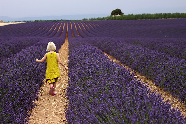 My daughter walking down the rows of lavender in the field
