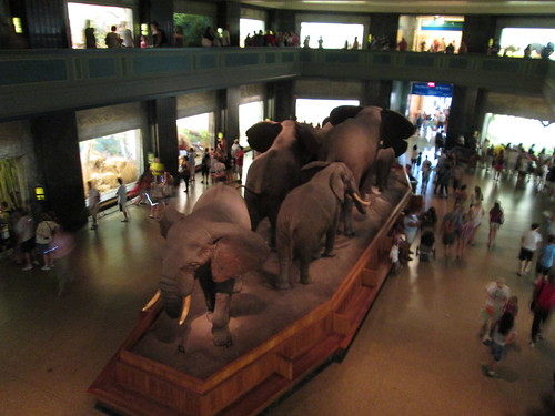 American Museum of Natural History, NYC. Nueva York