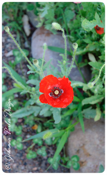 Inside-the-Poppy