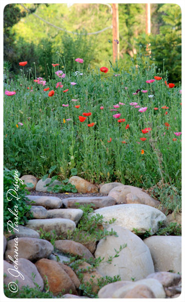 Steps-to-Poppies
