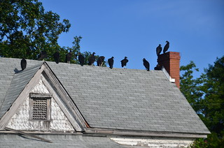 Vulture House