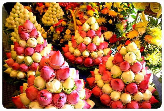 phnom penh central market lotus flowers