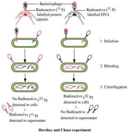 NCERT Solutions Class 12 Biology Chapter 6 – Molecular Basis of ...
