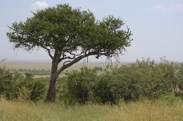 Maasai Mara Day 2