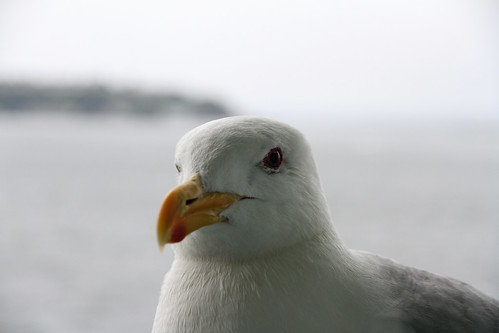 Gull - I Like This One, Too