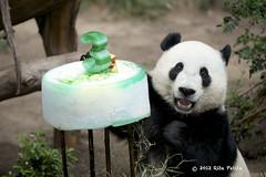 Yun Zi celebrates 3rd birthday at the San Diego Zoo