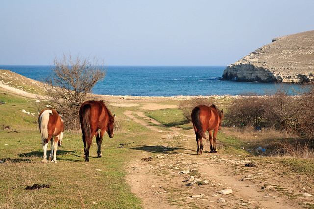 Horses going to the drinking place 2