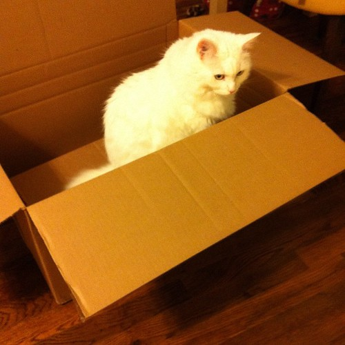 Nilla loves being in a box.