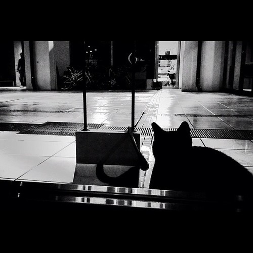 Night Watch  #igers #igdaily #instagood #instamood #iphonesia #instadaily #iphoneonly #instagramhub #photo #picoftheday #photooftheday #bestoftheday #cat #blackcat #night #yokohama #cafeflower