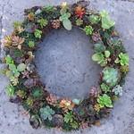 succulents 071