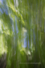 Abstract weeds, Adelaide