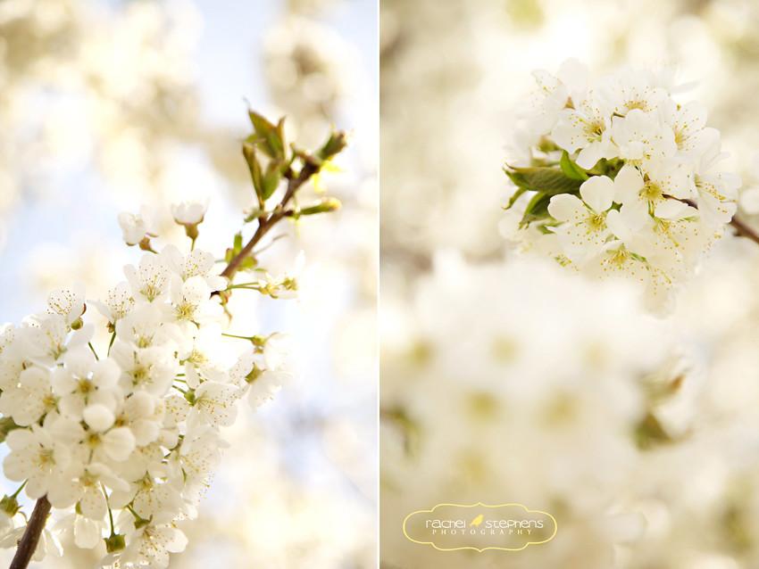 Blossom-2-2