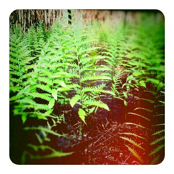 Green fern by SwampAngel