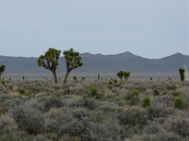 2012.03.29 - Twin trees