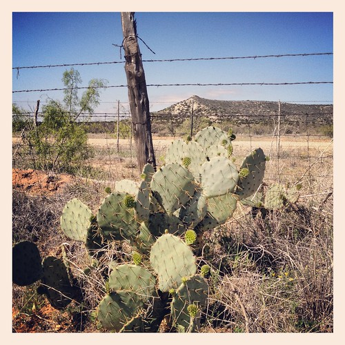 cactus west landscape texas desert pear arid llano prickley estacado
