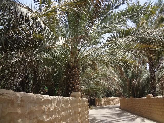 Os Oasis de Al Ain e Qattara em Al Ain, Abu Dhabi, EAU