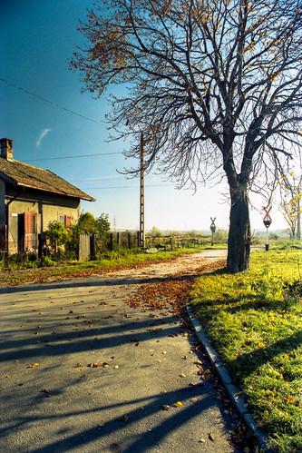 autumn shadow house tree film 35mm landscape hungary railway negative fa pécs railroadcrossing magyarország tájkép ház ősz árnyék vasút vasútiátjáró