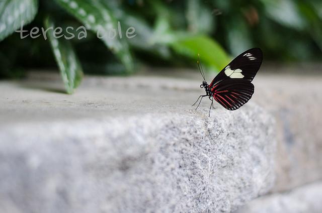 butterflies-1-11