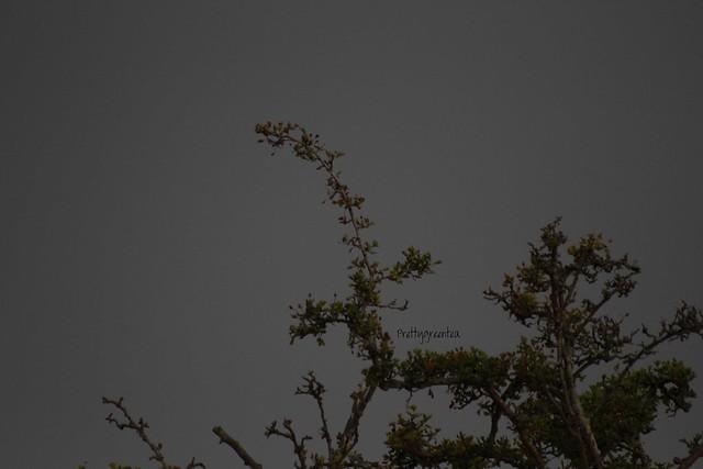prettygreentea tree