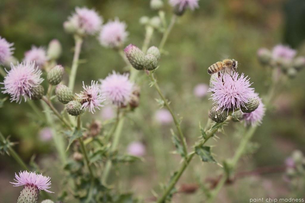 honeybee love