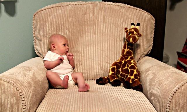 M vs Giraffe Week 6