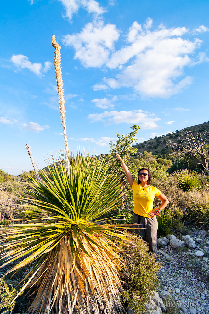 Juno and big sotol plant at Guadalupe Mountains