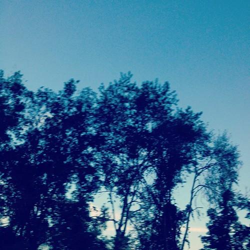 I find Her whispering through the trees. #secretmessages #divinespirit #goddess