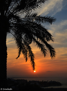 Sunset - Swinging on the date palm