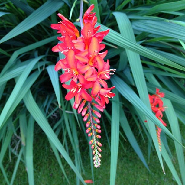 #flower #orange
