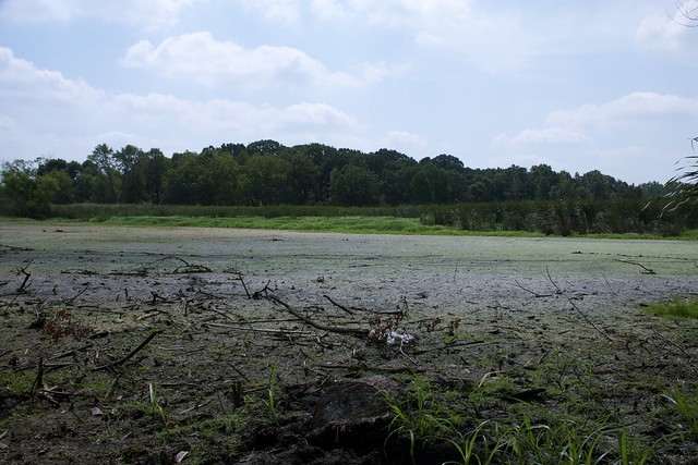 Lincoln Marsh, Mid Summer Mud