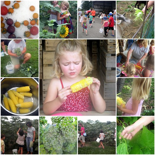 Week 7 of Kids in the Garden at Lapacek's Orchard - mosaic