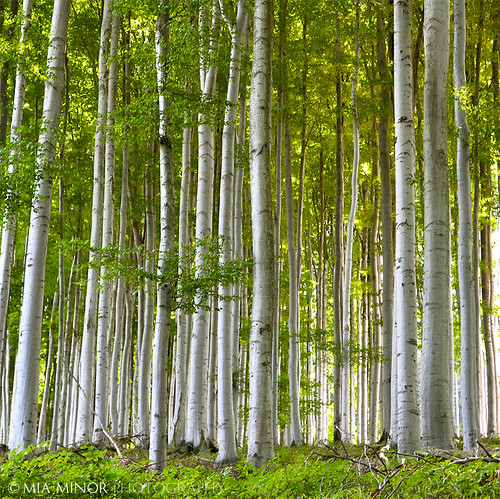 wood trees summer tree green nature forest nikon trunks moravia