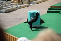 Pets Rule Show - SeaWorld 4