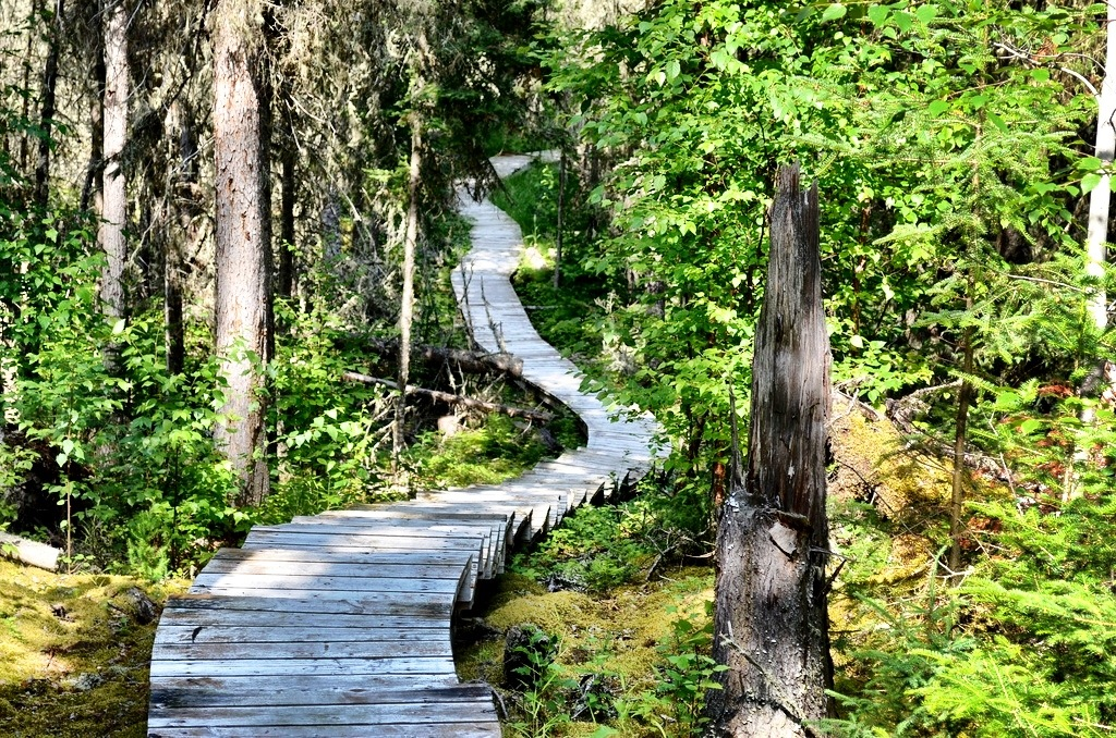 Grey Owl Cabin hike