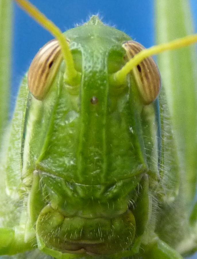 蝗蟲..................吧 (3P)