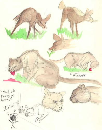 8.20.12 - Maine Wildlife Park studies